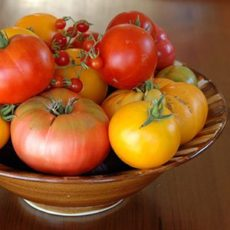 Which Tomato Varieties Are Right for You?